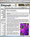 Telegraph-Phlox600