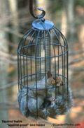 Squirrel inside caged bird feeder. Image: ©judywhite/GardenPhotos.com