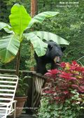 Black bear on the deck rail. Banana, Coleus. Image: ©GardenPhotos.com