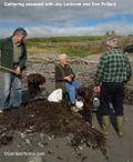Gathering seaweed in Cork with Joy Larkcom and Don Pollard