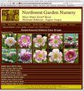 Double hellebores from Northwest Garden Nursery. ©Northwest Garden Nursery