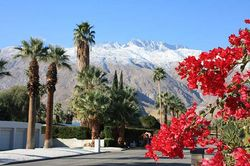 Bougainvillea and snow-capped peaks in Southern California. Image ©Ian Cooke
