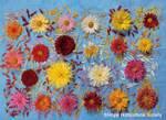 Chrysanthsplatetg